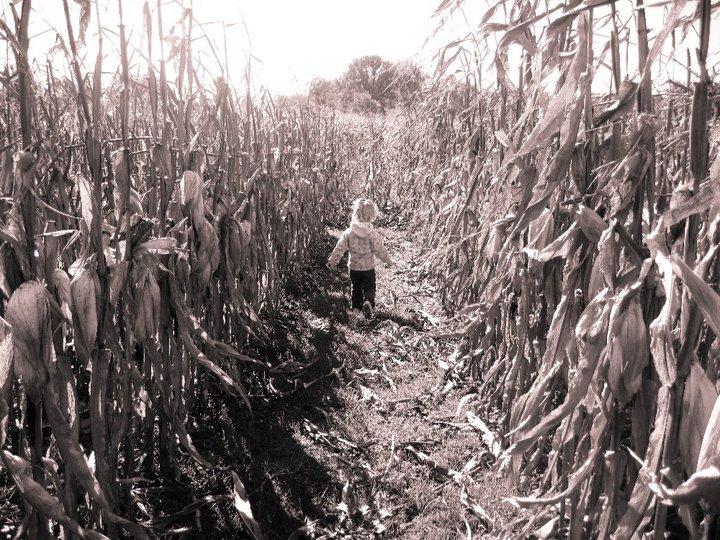 ada in corn